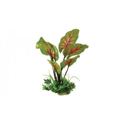 Roślina HAP 25cm Żabienica z trawami