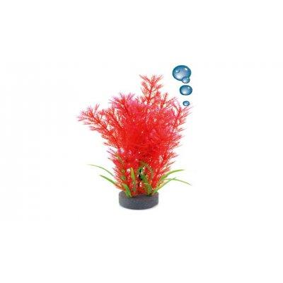 Roślina HAP 20cm Ludwiga4 napowietrzająca
