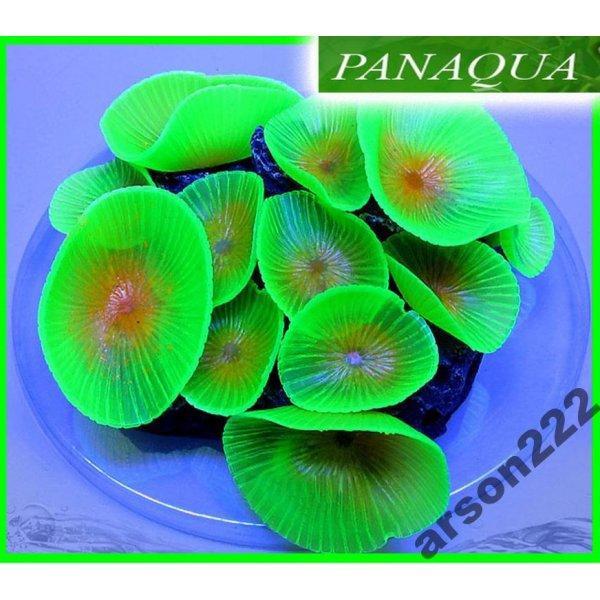 AZOO NEON CORAL (AZ27226) Discosoma Zielony
