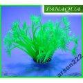 AZOO NEON CORAL (AZ27173)GONIPORA STOHESI Zielony