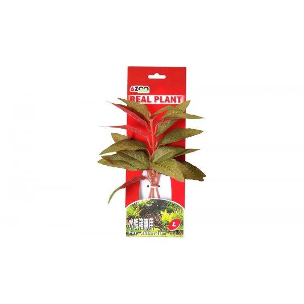 AZOO ALTERNATHERA GREEN L (22cm) Akcesoria