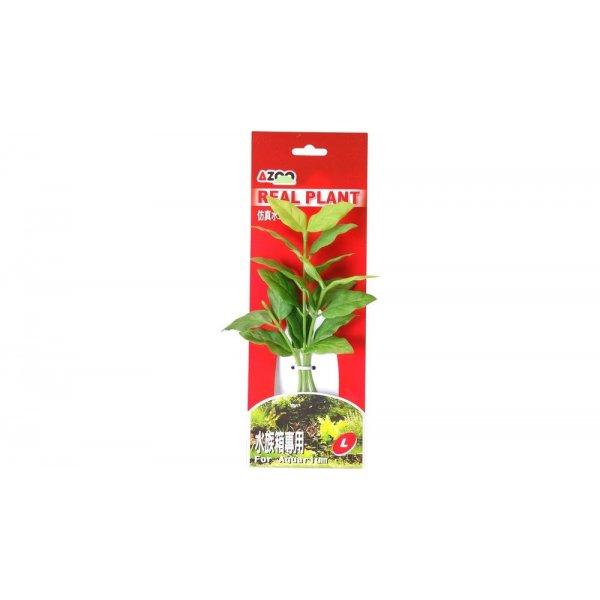 AZOO ROTALA MACRANDRA GREEN L (22cm) Akcesoria