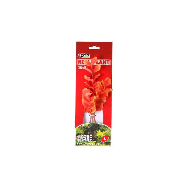 AZOO ROTALA MACRANDRA RED L (21cm) Akcesoria
