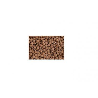 POKARM Quercustablets 50g. Glonojad Wyciąg z gębu