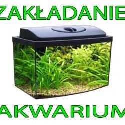 Zakładanie mojego pierwszego akwarium