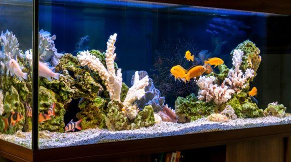 Jak prawidłowo założyć akwarium?