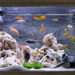Filtr do akwarium zewnętrzny czy wewnętrzny?