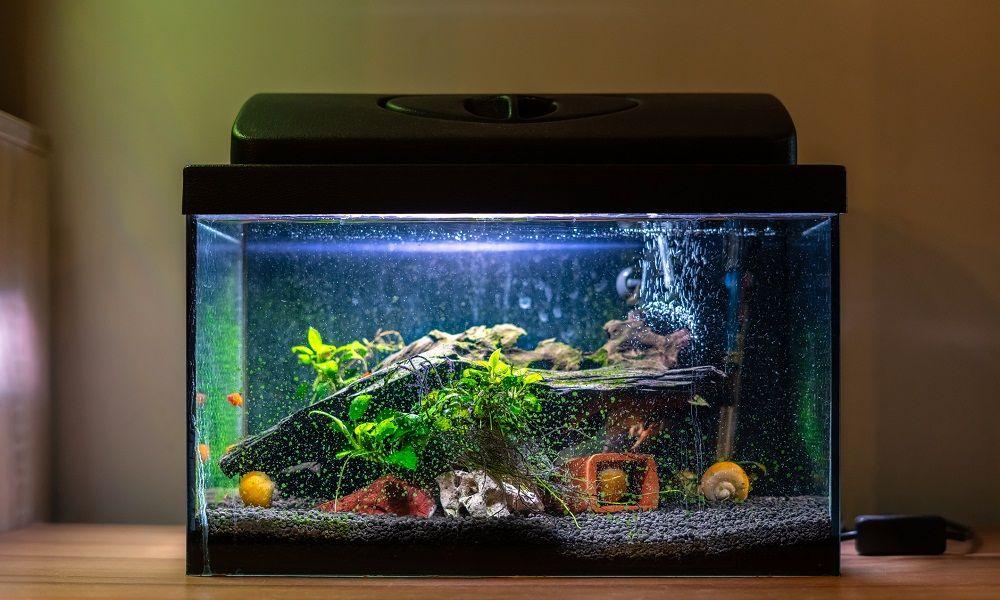 Czy każde akwarium wymaga pokrywy?