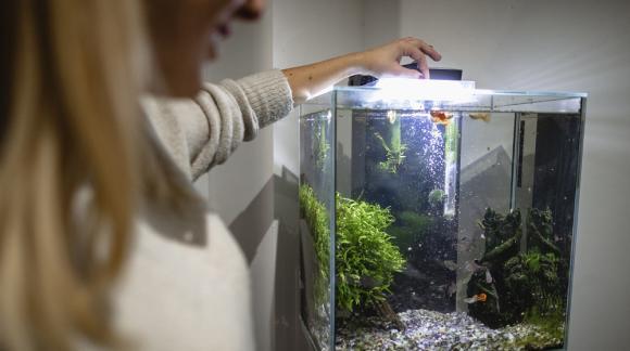 Jak dobrać oświetlenie do akwarium dla rybek?