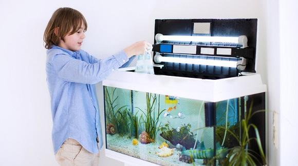 Jak dbać o akwarium dla rybek?