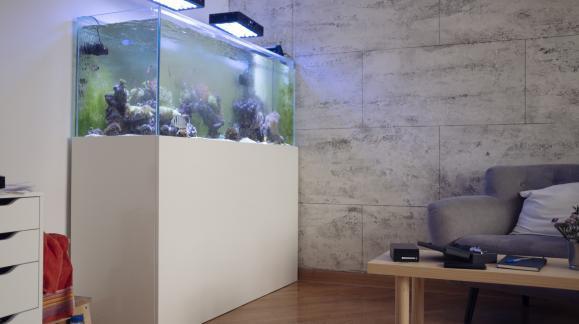 Wybór miejsca na akwarium. Gdzie najlepiej je postawić?