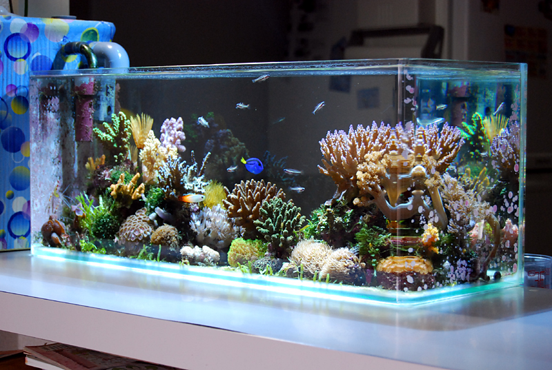 pico-reef-aquarium-marcello.jpg