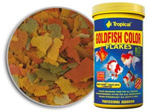 tropical goldfishcolor.jpg